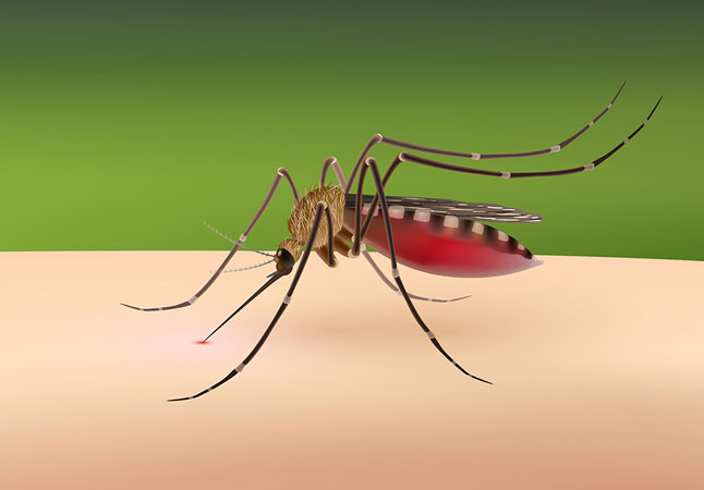 mosquito control in Upper Arlington